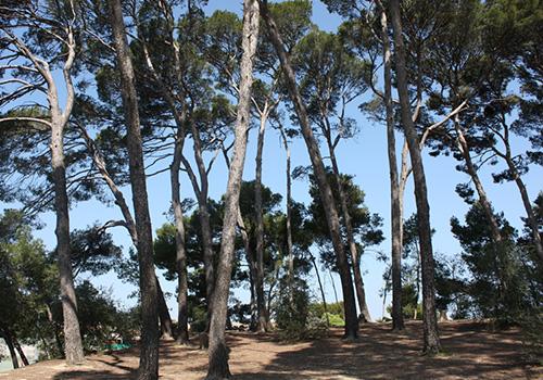 Pinède du camping Castelsec