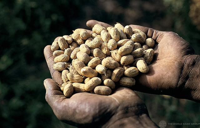 Mani con arachidi
