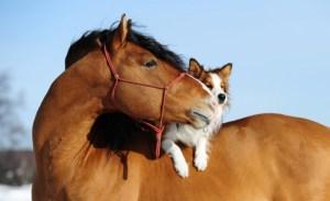 Il rapporto tra il cane ed altri animali
