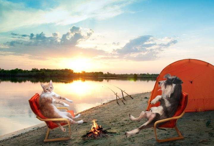 Camping dog and cat living it up!