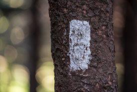 Appalachian Trail 10