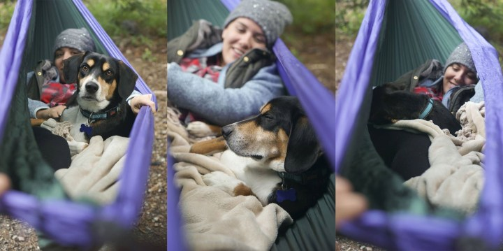 Camping with Dogs 1