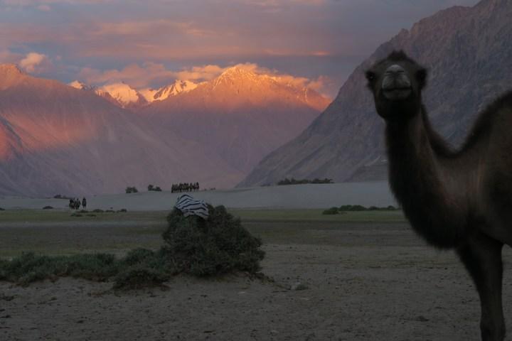 Ladakh 16