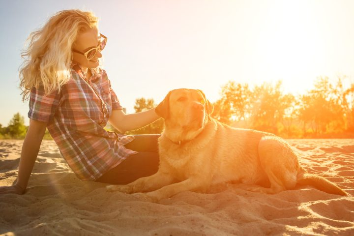 Health and Safety Tips for Camping With Your Dogs 7