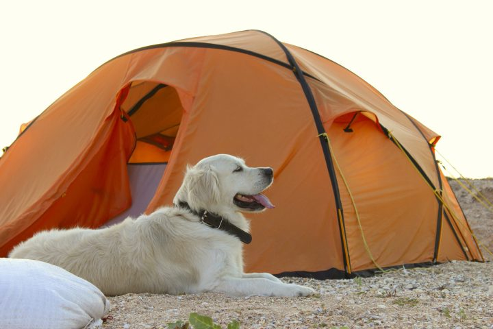 Health and Safety Tips for Camping With Your Dogs 1
