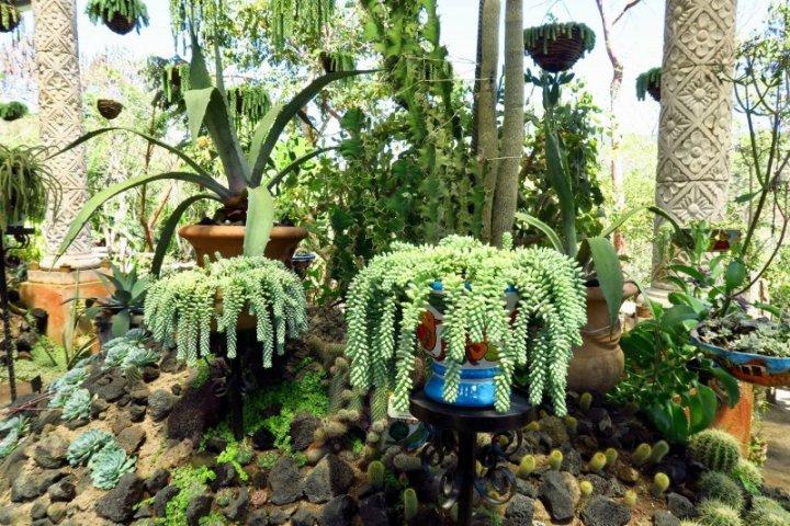 Cactus area of the Vallarta Botanical Gardens