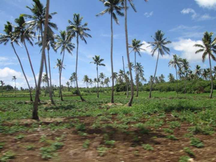 Tongatapu Island 26