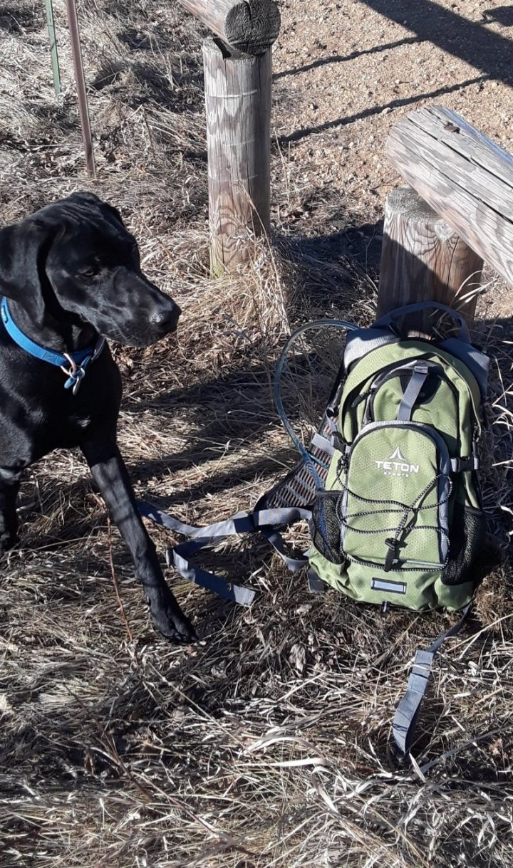 Oasis Hydration Pack with my dog