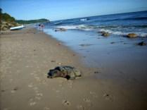 Władysławowo plaża