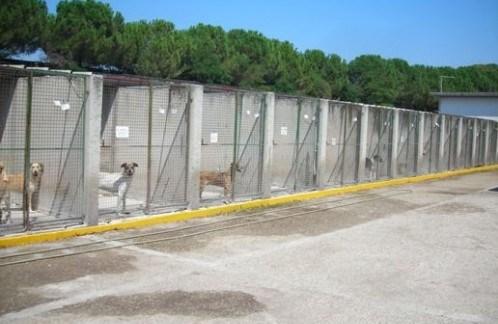 Castelvetrano, avviati i lavori di riqualificazione del canile comunale