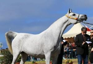 Cavallo Best in Show campione 2013