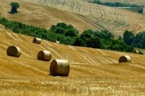 agricoltura-300x199