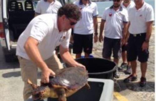 """[CP] Mazara, Liberazione in mare esemplare di tartaruga """"caretta caretta"""""""