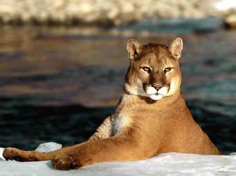 """Castelvetrano: sulle orme di """"Puma"""""""