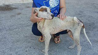 MAZARA. Cane stremato trovato nell'immondizia