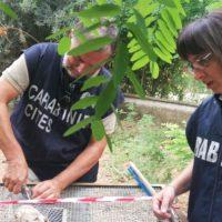 Maxi operazione antibracconaggio contro il traffico nazionale ed internazionale di avifauna