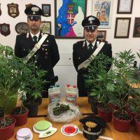 Marsala. Nascondeva coltivazione di marijuana in casa: arrestato 30enne marsalese.