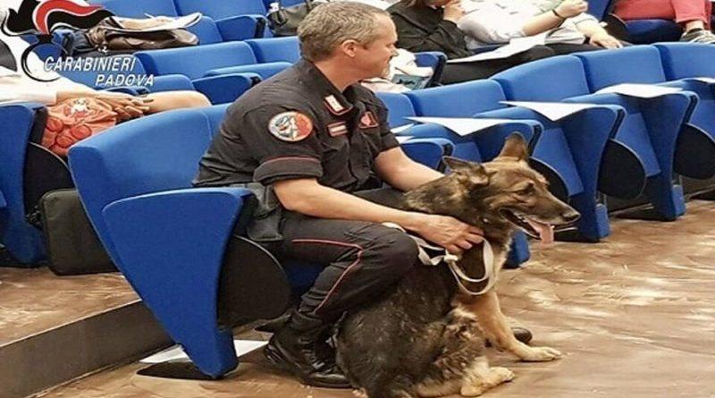 """Palermo. Grazie al fiuto del cane """"Ron"""" i carabinieri recuperano 500 grammi di hashish ed 8.000 euro"""
