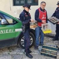 Palermo. Carabinieri forestali a Ballarò: sequestrati 35 esemplari di avifauna particolarmente protetta. Denunciato venditore abusivo.