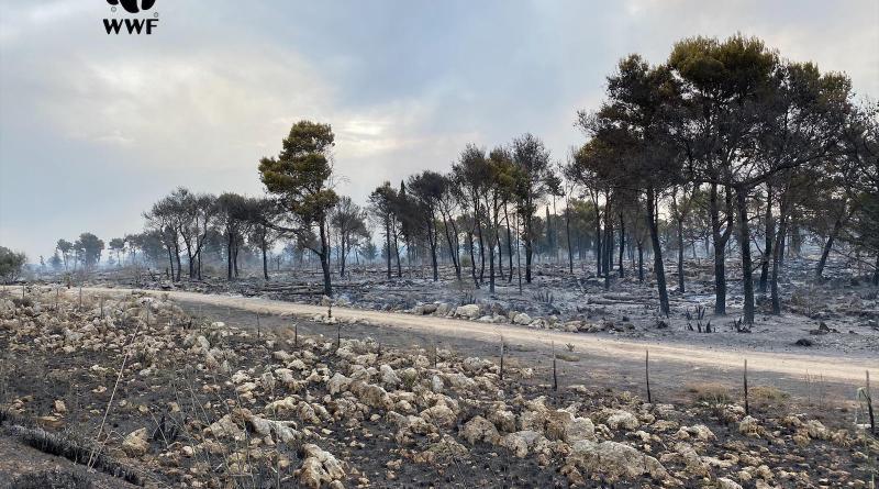 WWF: In Sicilia, per combattere gli incendi serve straordinaria normalità