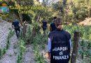 La finanza sequestra una maxi piantagione di marijuana nelle vicinanze della strada statale 514
