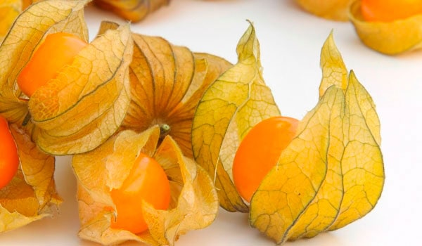 Physalis - Alquequenje