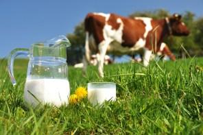 Resultado de imagen para leche vacas