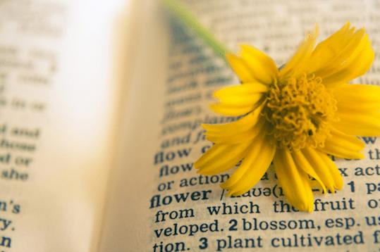 flower dictionary - pub dom