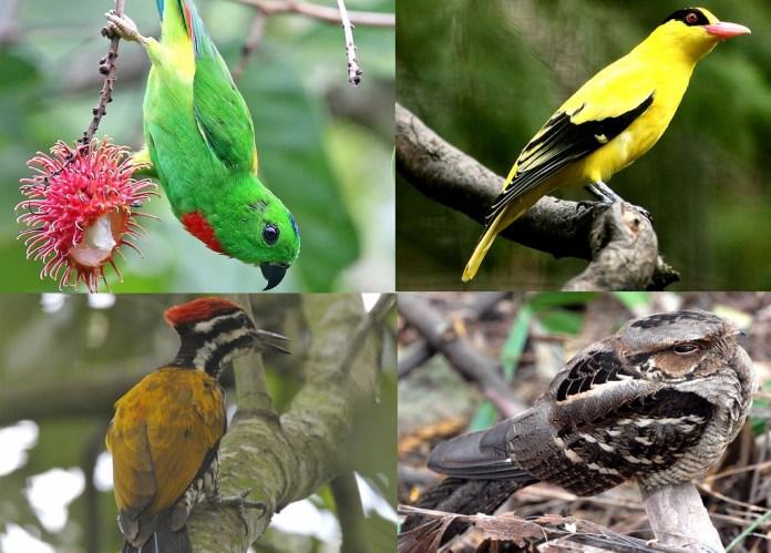 Singapore birds