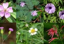 healing flowers Singapore