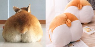 Corgi butt cushion