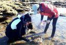 VIDEO: Descubren diez nuevas especies en La Caleta de Cádiz