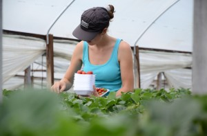 agriculture-659163_960_720