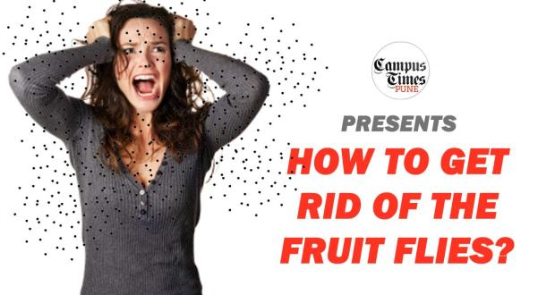 how-to-kill-fruit-flies
