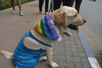 dog_pride_walk_pune_campus_times_lgbtq