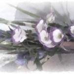 PhotoFunia_4.jpg