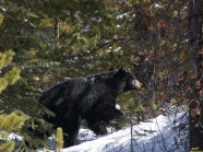 cs-alberta-wildlife-5
