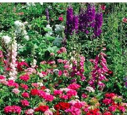 Flowers by Lucy Izon