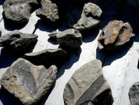 Fundy Fossils Cape Enrage