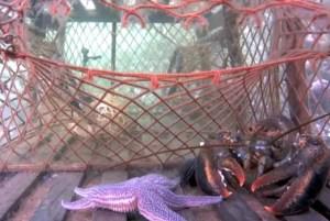 Lobster Trap Webcam - Nova Scotia Webcams