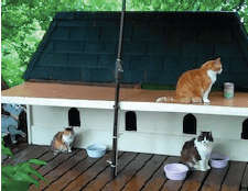 Ottawa Cats