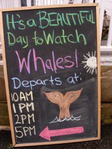 Whale Watching St Andrews NB @ Lucy Izon