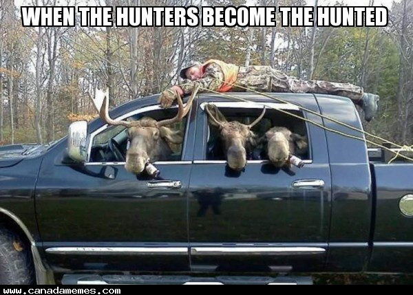 When the hunters become the hunted