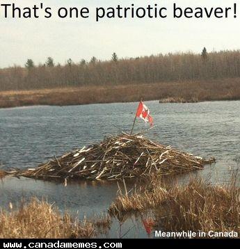 🇨🇦 Patriotic Beaver