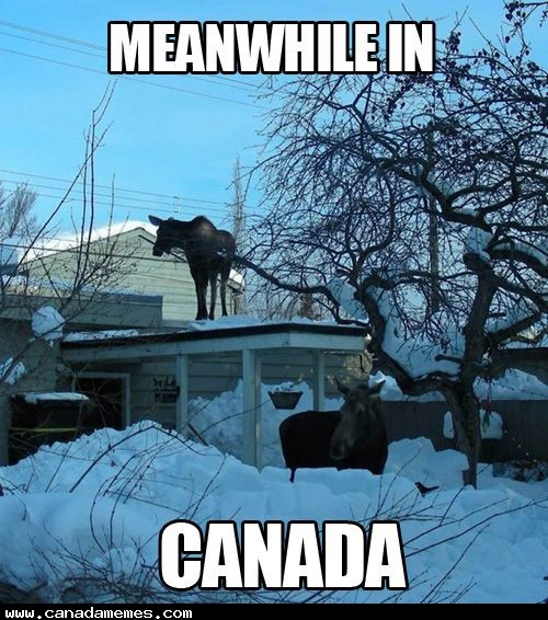 🇨🇦 Just an ordinary day in Canada