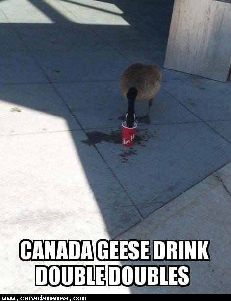 🇨🇦  Canada Geese drink Double Doubles