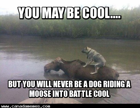 🇨🇦 You may be cool....but you will never be 'A dog riding a moose into battle' cool
