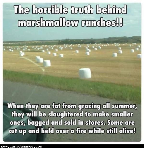 🇨🇦#BANMARSHMALLOWRANCHES