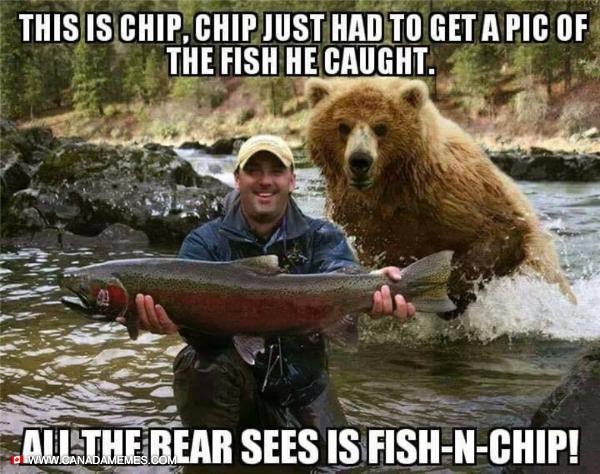 Bears like Fish n Chips