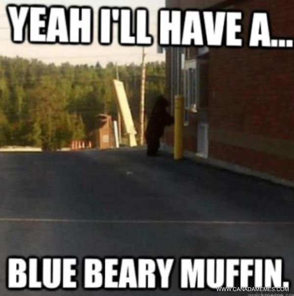 Beary Funny